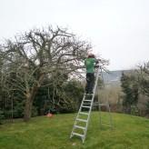 Întreținerea arborilor