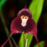 Cele mai neobișnuite specii de orhidee