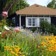 Creștere și îngrijire flori sălbatice